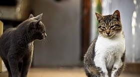 flera_katter_i_ett_hushåll