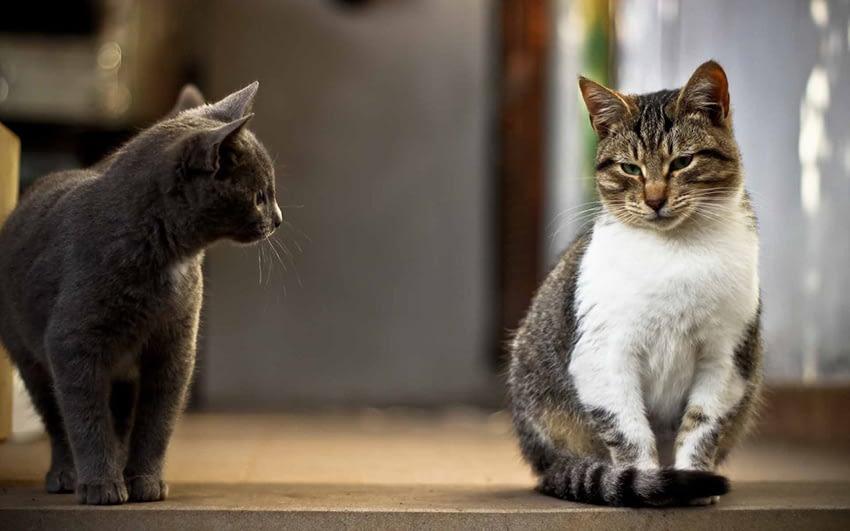 Hur man blir av med lukten av katturin